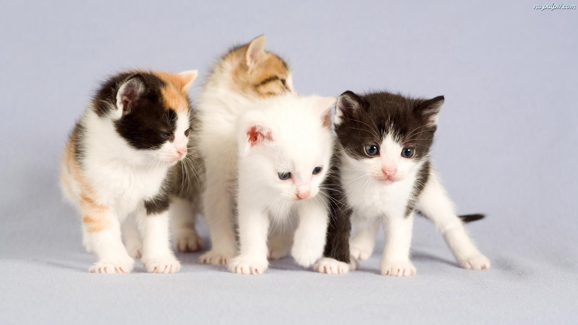 Cztery kotki na pulpit - Cute kittens hd images ...